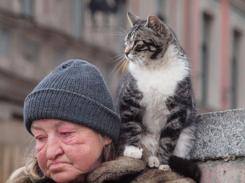 Kattenvrouwtje